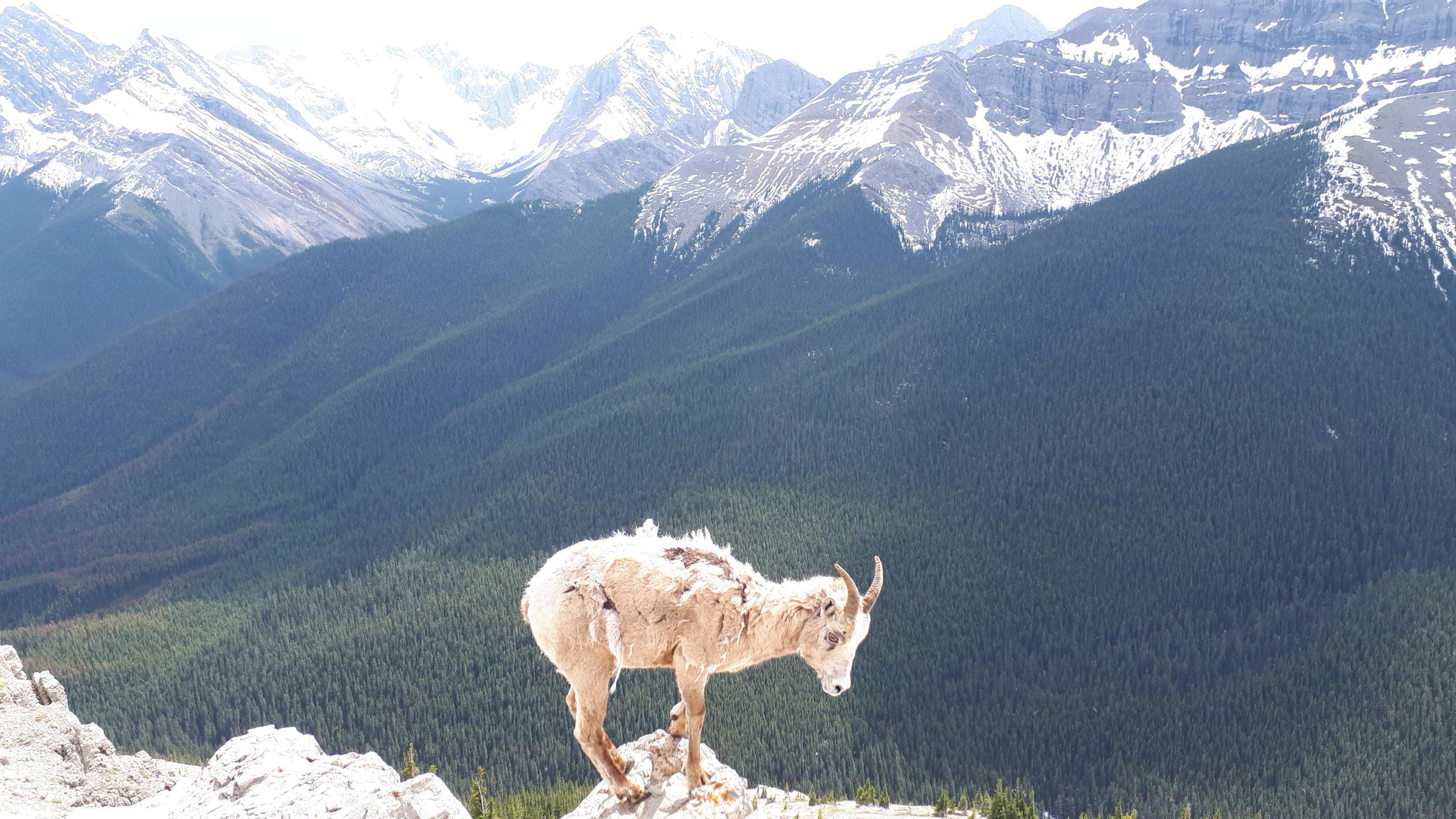 Canada's Panoramic Captures